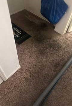 Quick Carpet Stain Removal Near Lake Balboa